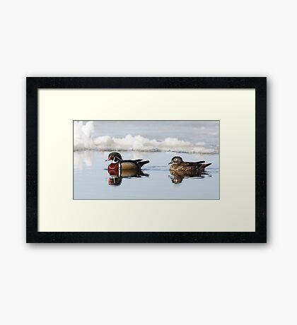Wood Ducks on river Framed Print