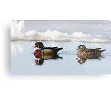 Wood Ducks on river Metal Print