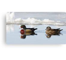 Wood Ducks on river Canvas Print
