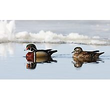 Wood Ducks on river Photographic Print