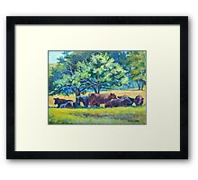 Cows Napping Framed Print