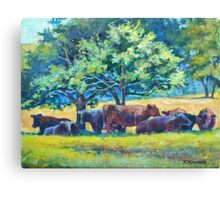 Cows Napping Canvas Print