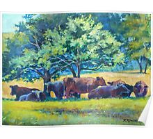 Cows Napping Poster
