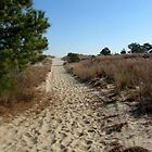 Path to Cape Henlopen, DE by Bine