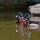 Wood Duck Buds by Jim Cumming