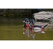 Wood Duck Buds Photographic Print