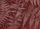 Ferns in Red by MotherNature