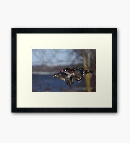 Together Forever - Wood Ducks Framed Print