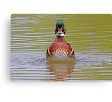 Wooden Chest - Wood Duck Canvas Print