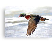 Colourful flight - Wood Duck Canvas Print