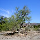 Tree in The Living Desert by Jo Nijenhuis