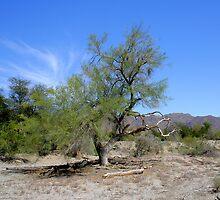 Tree in The Living Desert by Jo Nijenhuis