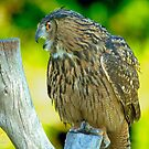 Talking Owl by Photography by TJ Baccari