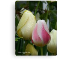 Pink & Yellow Tulips Canvas Print
