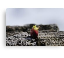 The sign of spring Canvas Print