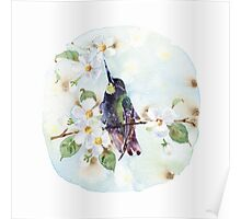 Watercolor | Hummingbird and Apple Blossom Poster