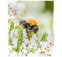 Tree Bumble Bee Poster