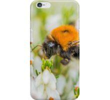 Tree Bumble Bee iPhone Case/Skin