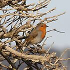 Robin by Neil Ludford