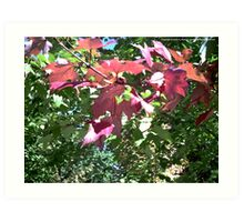 Red Leaves Among the Green Art Print