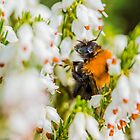 Tree Bumble Bee by Mark Bangert