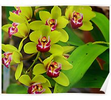 Lime Green Orchids Poster