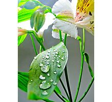 Wet Leaf for a Lilium Photographic Print