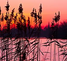 Through the Reeds by mchalephoto