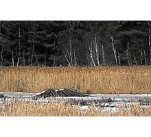 Beaver Dam in Winter Photographic Print