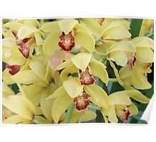 Yellow Orchids Poster