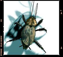 cockroach by Jean-François Dupuis