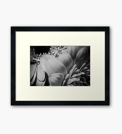 B/W MacroFlower Five Framed Print