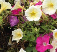 Fort Worth Flowers Sticker