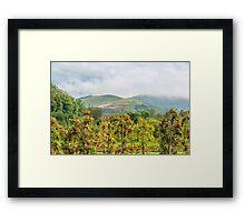 Apple harvest below Bad Berg, Kaiserstuhl, Germany Framed Print