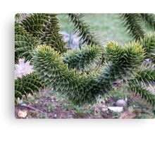 Spikey Leaves Canvas Print