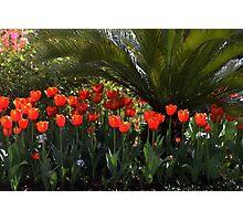 Tulip Row Under a Palmetto Tree Photographic Print
