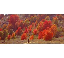 Fall Trees Photographic Print