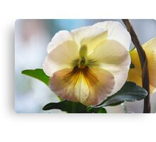 A Pansy like a Painting Canvas Print