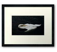 Sing Swan Song Framed Print