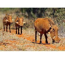 Warthog family Photographic Print