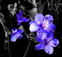 Purple selections by Rosalie Scanlon