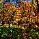 Forest Footpath In Autumn at Johnson's Mound by Roger Passman