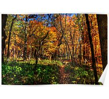 Forest Footpath In Autumn at Johnson's Mound Poster