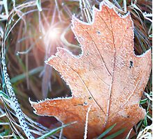 Autumn Frosted Leaves by rumisw