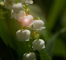 Lily Of The Valley Flowers by MotherNature2