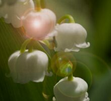 Lily Of The Valley Flowers Sticker