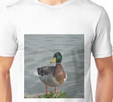 Curious mallard drake at water's edge Unisex T-Shirt