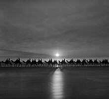 Camels on cable beach. by trevorb