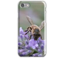 Bee on lavender flower spike iPhone Case/Skin