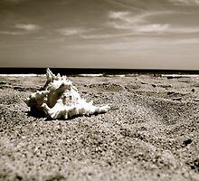 Seashell Splendor by Lynnrmorris